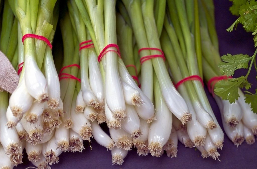 Re-Growing Scallion