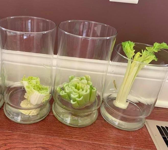 RE-Growing Vegetables